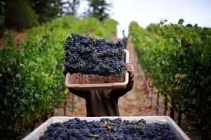 Valpolicella Private Wine Tour
